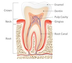 Root Canals In Covina By Dr Michael C Huang